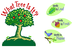 Use detailed illustrations to identify trees by their leaves or fruit. If you know the name of the tree, see illustrated information about that tree.